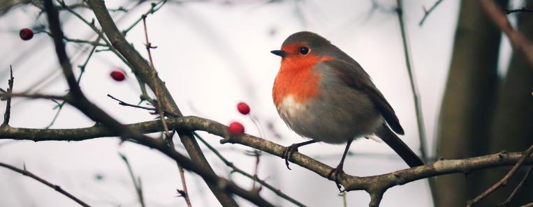 Your Winter Bird Watching in Yellowstone Checklist – SVI-NEWS