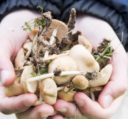 beginner's guide to mmushroom foraging featured image