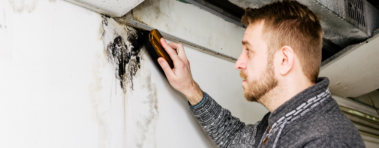 The Health Dangers of Basement Mold