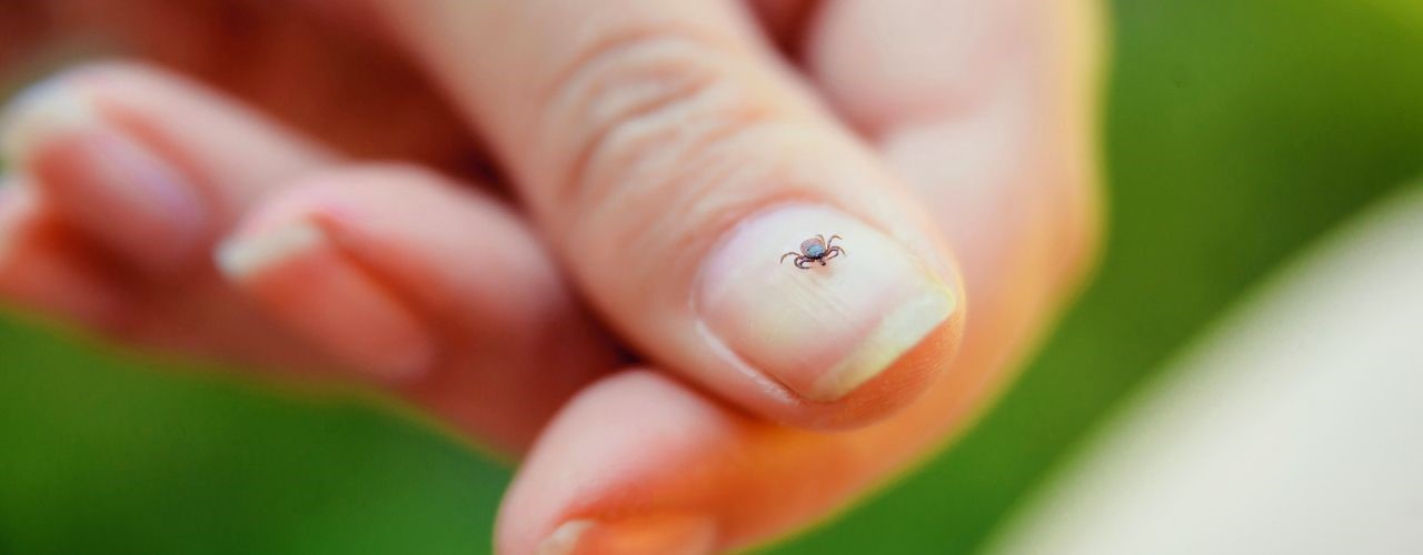 5 Easy and Useful Tips for Tick Bite Prevention