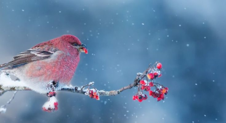Tips for Bird Watching in the Winter