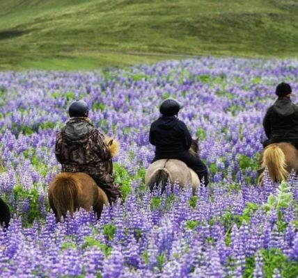 The Best Horses for New Riders