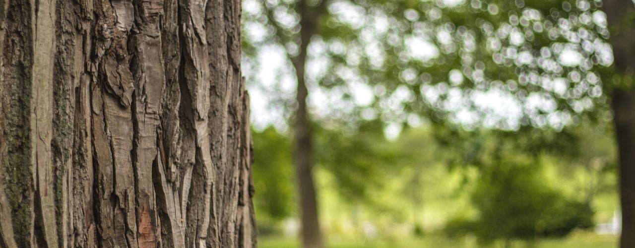 Different Steps To Figure Out Your Tree's Age