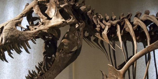 Why Having a Fascination With Dinosaurs Is Beneficial