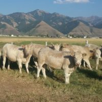 All-Natural Grass-fed Beef