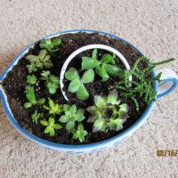 Succulent Arrangements for sale