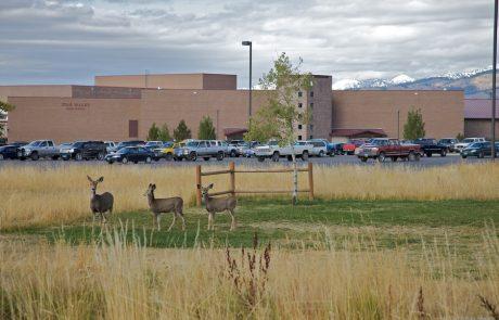 LCSD#2 ends lockdown at SVHS