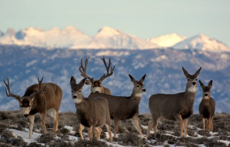 Secretary Ryan Zinke and Governor Matt Mead Work Together to Conserve Big Game Migration Corridor in Southwest Wyoming