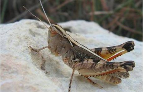 UW team that revolutionized grasshopper control is recognized