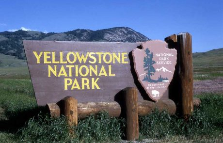 10-year-old boy injured by bear in Yellowstone National Park
